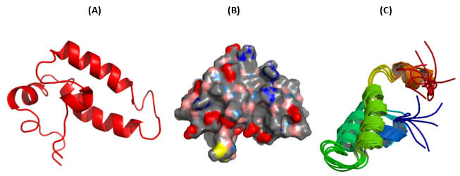 Hsp40 Structure - Structures of the J-domain in the human type 2 DNAJ/HSP40 family member DnaJB1/Hdj1.